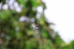 Spin, spinneweb Stock Afbeeldingen