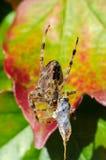 Spin terwijl het eten Stock Foto's