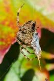 Spin terwijl het eten Stock Afbeelding