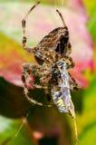 Spin terwijl het eten Stock Fotografie