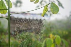 Spin webby in het landbouwbedrijf Stock Foto