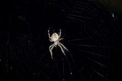 Spin in zijn Web Stock Afbeeldingen