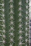 spina del cactus Immagini Stock