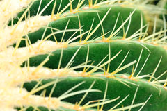 Spina del cactus fotografia stock