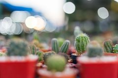 Spina del cactus nella struttura rossa del fondo dei vasi Fotografie Stock