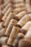 Spina del sughero del Cile Fotografia Stock