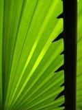Spina della palma Fotografia Stock Libera da Diritti