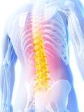 Spina dorsale evidenziata Fotografia Stock