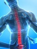 Spina dorsale umana dei raggi X Immagine Stock