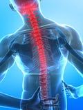 Spina dorsale umana dei raggi X illustrazione di stock