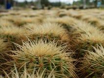 Spina e fiore del cactus Fotografia Stock Libera da Diritti