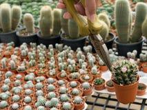 Spina e fiore del cactus Fotografie Stock Libere da Diritti
