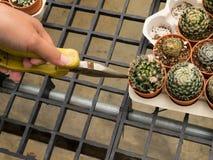 Spina e fiore del cactus Fotografia Stock