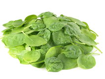 Spinach. Leaves on studio isolated background royalty free stock photography