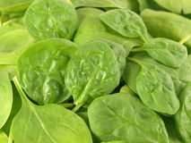 Spinach. Vegetable green leaves background royalty free stock photos