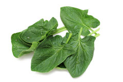 Spinach Royalty Free Stock Photos