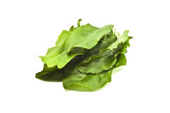 Spinach. Bunch spinach isolated on white Royalty Free Stock Photo