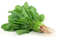 Spinach. Fresh spinach in a white background