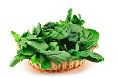 Free Spinach Stock Photography - 17863952
