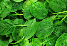 Free Spinach Stock Image - 18539211