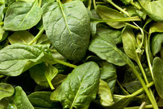 Spinach. Closeup of spinach (Spinacia oleracea) leaves Stock Photography