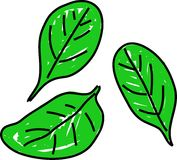 Spinach royalty free illustration