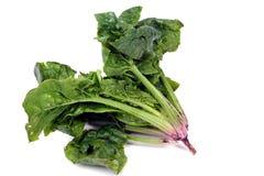 Spinach. Wild spinach grown in Turkey stock photos