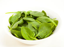 Free Spinach Stock Image - 23862021