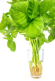 Spinach. Fresh spinach in glass on white background Stock Image