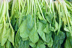 Spinach. The background of fresh spinach stock photography