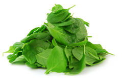 Free Spinach Stock Photos - 3668673