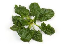 Spinach. Bunch of spinach on the white royalty free stock photos