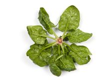 Spinach. Bunch of spinach on the white royalty free stock images