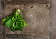 Spinach Stock Photos