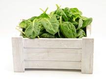 spinach Fotografia de Stock Royalty Free