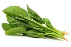 spinach Imagens de Stock