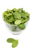 spinach Fotos de Stock Royalty Free