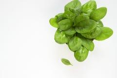 spinach Imagem de Stock