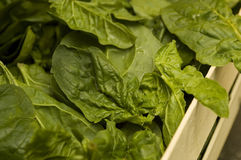 Spinach At Market Stock Images