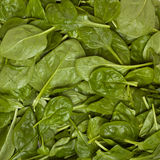 Spinach Background Stock Photo