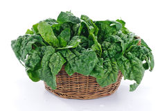 Spinach in the basket Stock Photos
