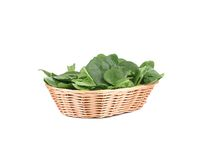 Spinach in the basket. Stock Image