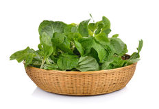 Spinach in the basket on white background Stock Photos