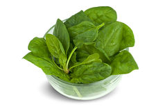 Spinach into the bowl Stock Photography