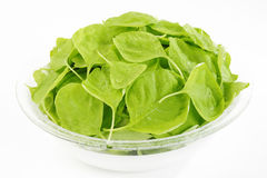 Spinach in bowl Stock Photography