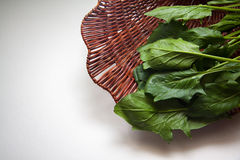 Spinach in box Stock Image