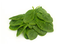 Spinach Bunch Royalty Free Stock Images