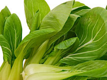 Spinach Cabbage Stock Photo