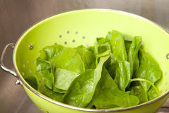 Spinach in colander Stock Photo