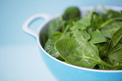 Spinach in colander Royalty Free Stock Image